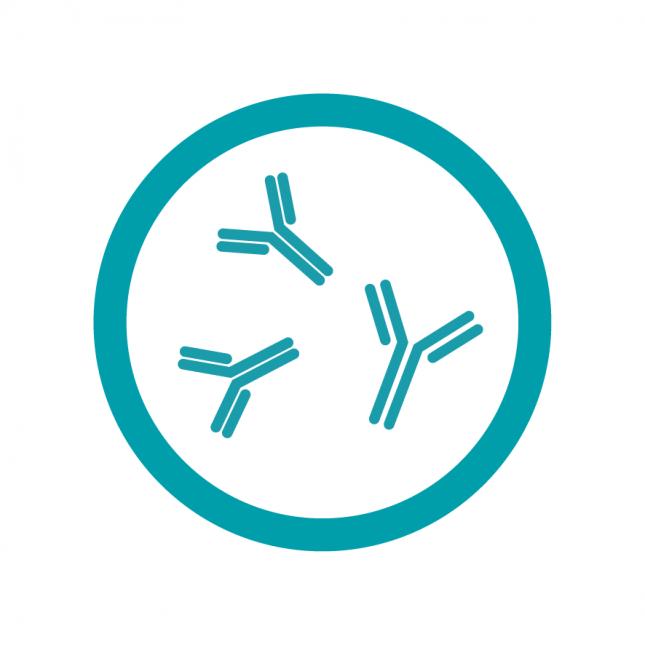 Antibody Quantification