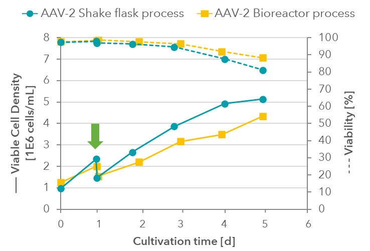 AAV-2 Cell density and viability