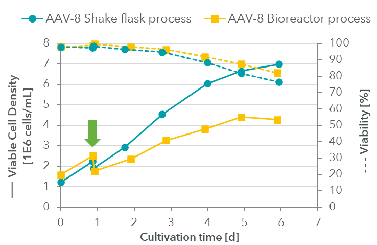 AAV-8 Cell density and viability