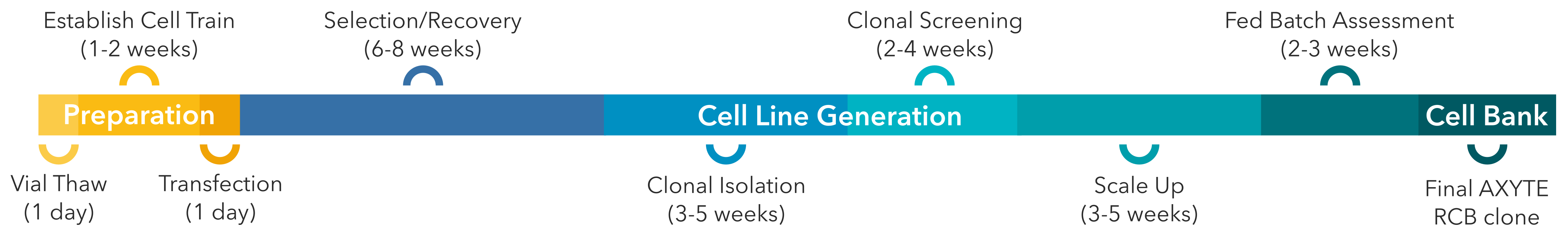 Timeline of AXYTE cell line development