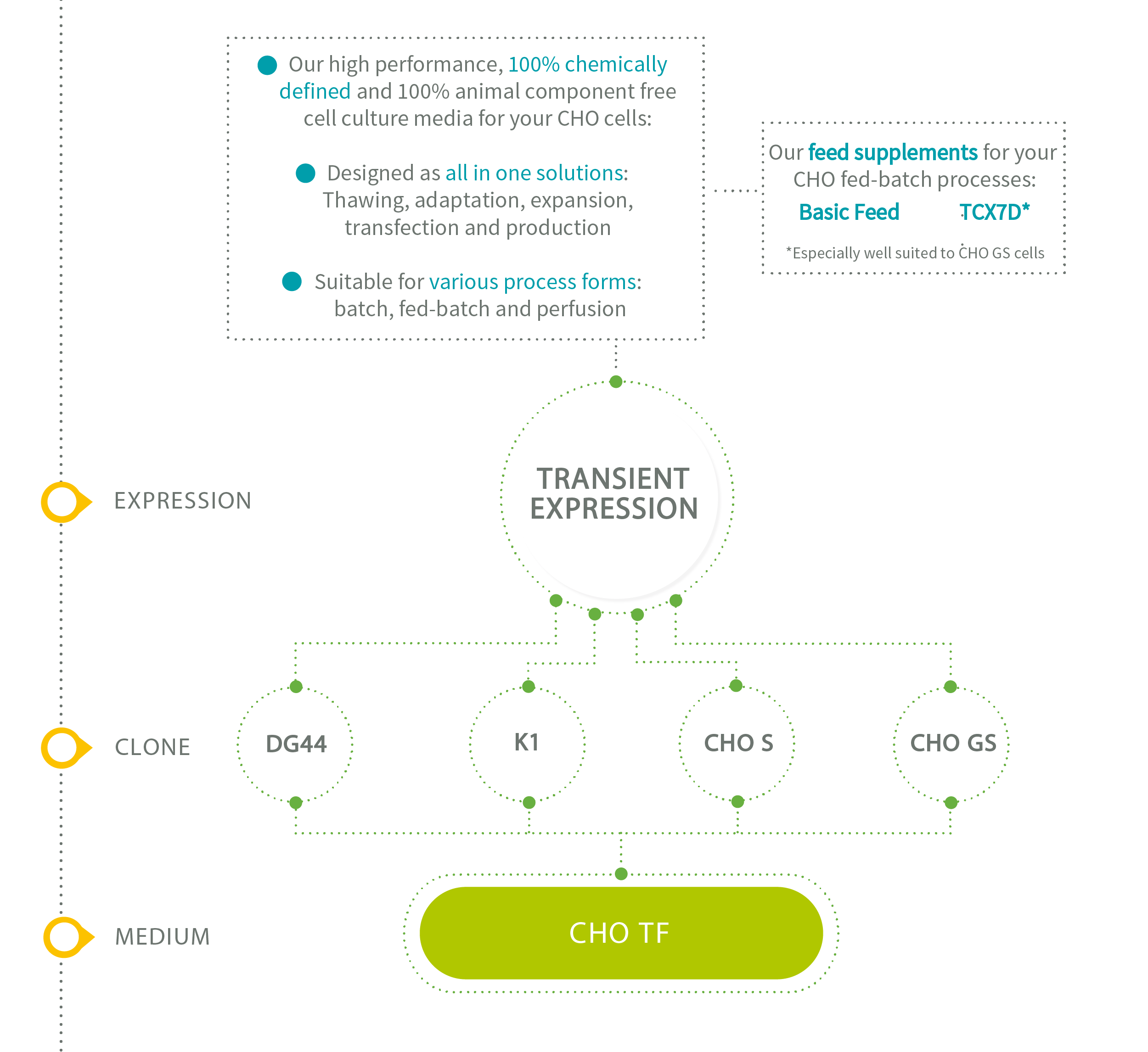 Xell CHO media for transient expression